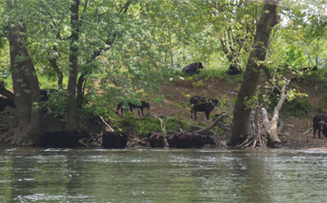 Envision the James Receives Funding for Sediment and Nutrient Reduction in James River Watershed